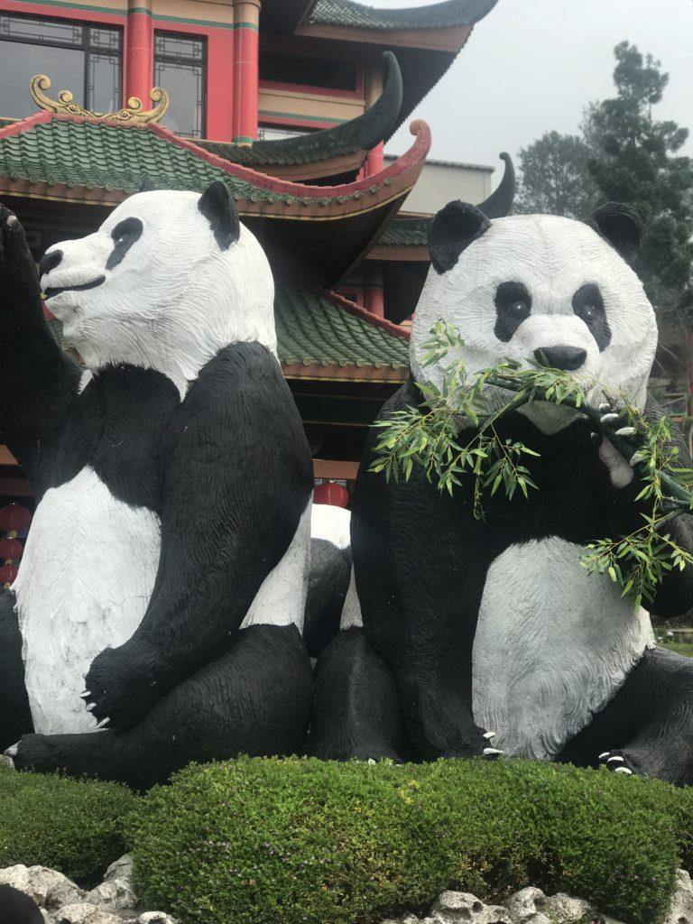 Pandas lazing around